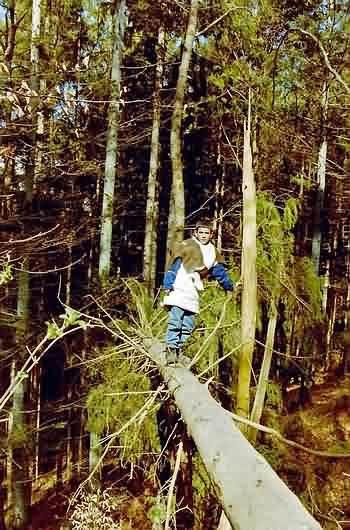 Waldspiele  Spiele und Quiz im Wald
